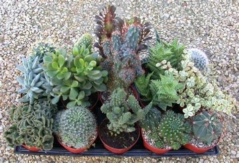 vasi per piante grasse vasi per piante grasse vasi