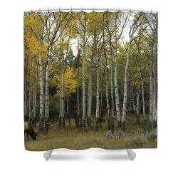 Wildlife Shower Curtains Time Fading Shower Curtain By Wildlife