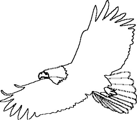 martial eagle coloring pages eagle pictures to color