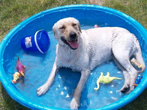 dogs in pool buying a swimming pool tips