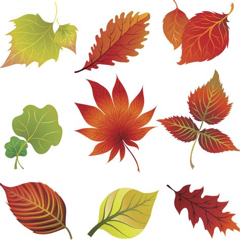 clipart autumn leaves fall leaves clip vector vector graphics