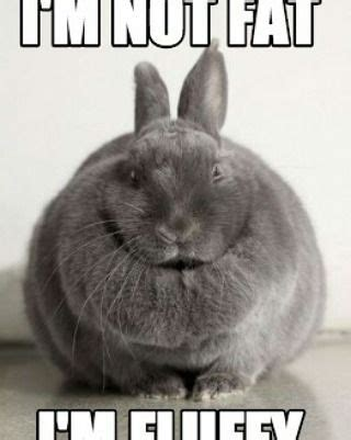 Angry Bunny Meme - i m not fat i m fluffy bunny cuteanimals pets funny