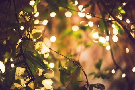 10 Creative Uses For Twinkle Lights In Your Home Twinkle Tree Lights