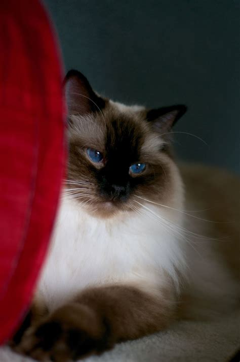 souls 2 ragdoll 17 best images about the big blue eye on