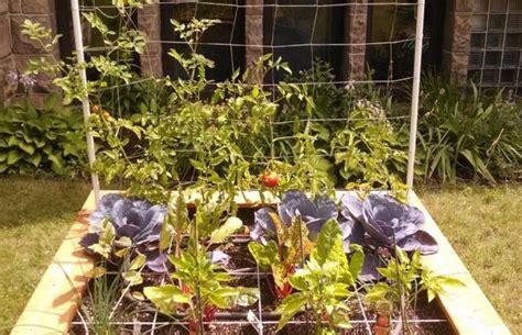 Carrã Potager Tomates R 233 Aliser Soi M 234 Me Un Potager En Carr 233 Sur 233 Lev 233