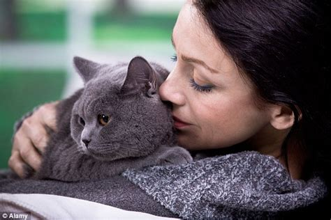 comforting cat seattle humane s blog saving lives completing families