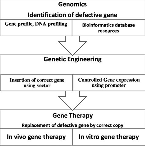 gene therapy flowchart gene therapy flowchart flowchart in word