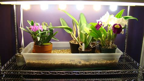 plants that thrive in artificial light artificial lighting for plants lilianduval