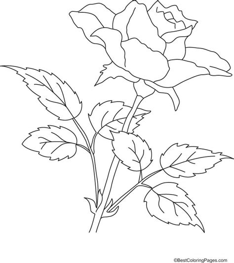 coloring pages of real roses free coloring pages of rose with thorns