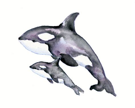 watercolor tattoo whale watercolor orca whale search koha clean