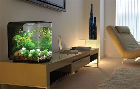 cuisine fish tank ideas largesize soft brown wall