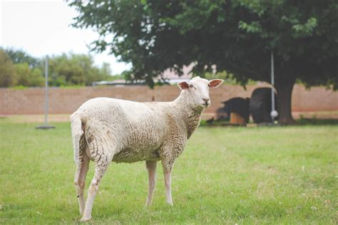 rising sheep farming getting started with your em reap