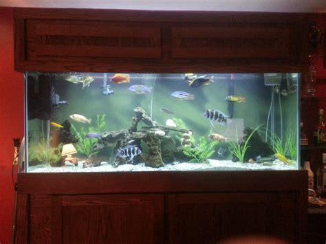 basement fish tanks quotes