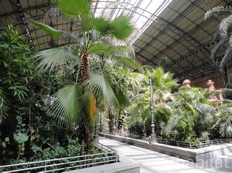 Botanical Garden Station Madrid S Atocha Station Doubles As An Indoor Botanical Garden And Turtle Sanctuary Atocha