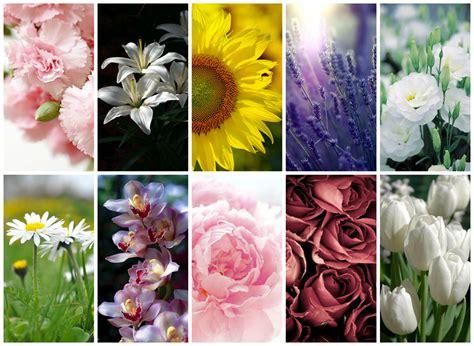 tipi di fiori e significato significato dei fiori pi 249 comuni per decorare casa