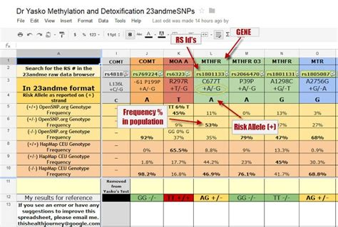 Mercury Detox With Mthfr And Cbs Mutations by Yasko Methylation Snp S Spreadsheet 23andme Mthfr