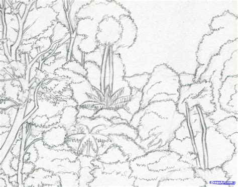 rainforest canopy coloring page how to draw a canopy rainforest canopy step by step