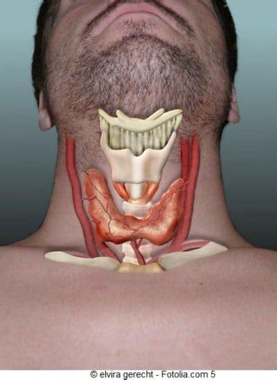 alimenti per ipotiroidismo ipotiroidismo dieta e rimedi naturali terapia eutirox