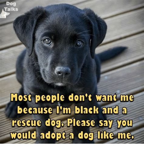 T Dog Meme - dog talks most people don t want me because i m black and