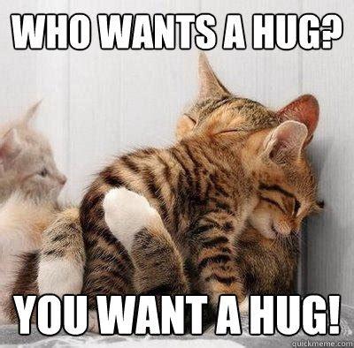 Hug Meme - kitty hug memes quickmeme