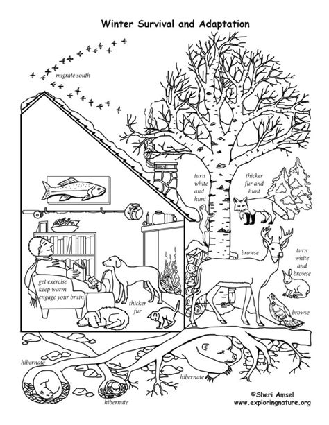 coloring pages of animals that migrate winter animal mural coloring pages of animals that migrate