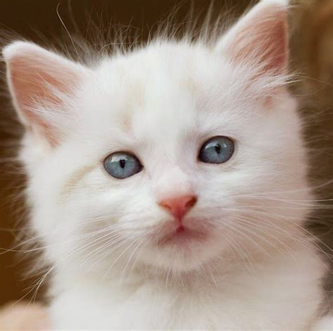 Imagenes The Cat | 17 best images about gatos 3 on pinterest posts white