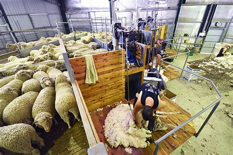 Shearing Shed Solutions by Shearing Shed Design Features Proway