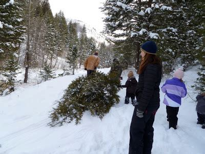 cut down your own christmas tree edmonton sun valley families cutting your own tree