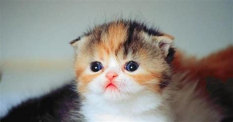 wallpaper anak lucu wallpaper kucing anak kucing lucu imut gambar foto wallpaper