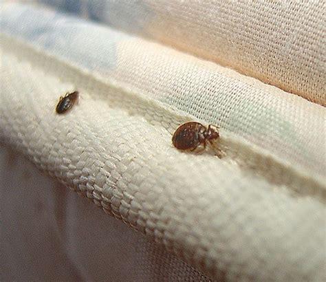 chinche colchon chinche de cama fundas protectores para colch 243 n anti
