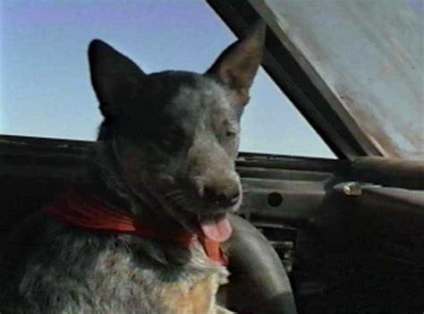 road dogs the road warrior stills
