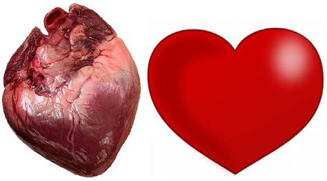 imagenes reales corazon humano corazon duende de cuba