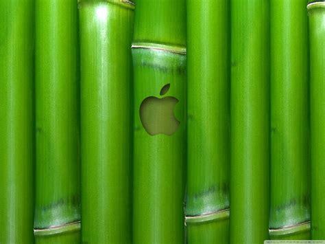 beautiful bamboo wallpapers weneedfun