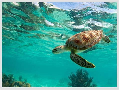 lo que no sab 237 fotos y fondos fotos de tortugas fondo de tortugas