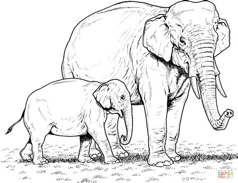 asian elephant coloring page 85 coloring pages elephant asian elephant coloring page