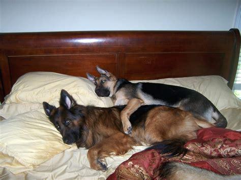 funny dog beds funny dog beds funny dog beds factory supply attractive