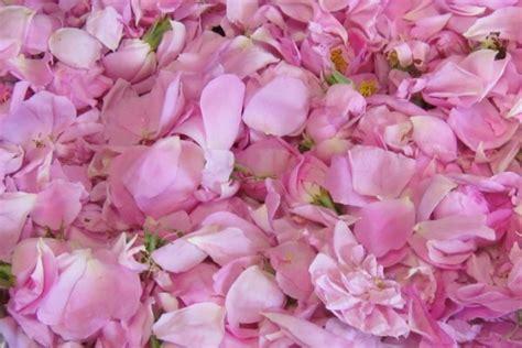 petali di fiore petali di rosa ed essenza femminile inherba il mondo