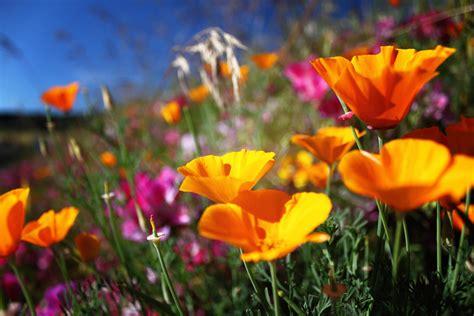 northwests   wildflower hikes portland monthly