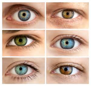 how is eye color determined what determines the color of your wonderopolis