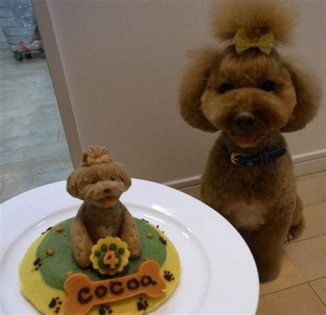 cakes for dogs birthday cakes for dogs neatorama