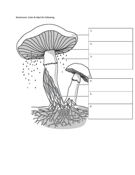 fungi coloring worksheet kingdom fungi coloring worksheet answer coloring pages