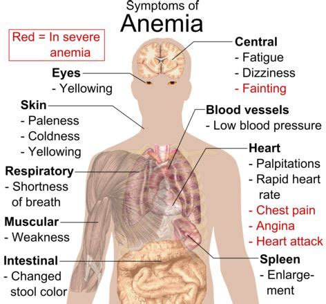 autoimmune hemolytic anemia symptoms, treatment