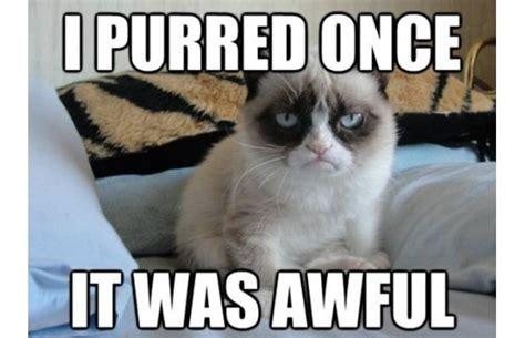Grumpy Cat Funniest Memes - funniest grumpy cat memes fanphobia celebrities database
