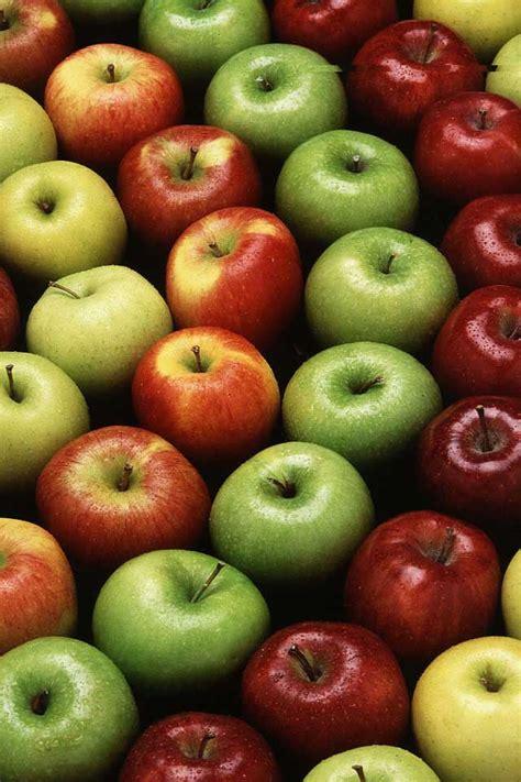 Buah Apel daftar nama buah dan kolesi gambar buah buahan gambar hidup