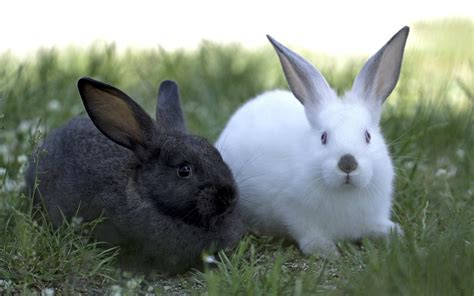 and rabbit rabbit hd wallpapers rabbit hd pictures free hd wallpapers images