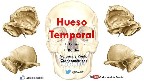 imagenes de huesos temporales anatom 237 a hueso temporal escama pe 241 asco procesos