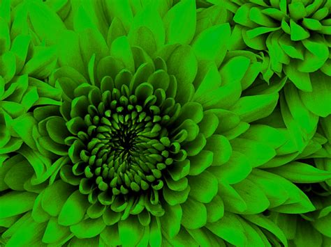 lime green flower by mikenelson1 on deviantart