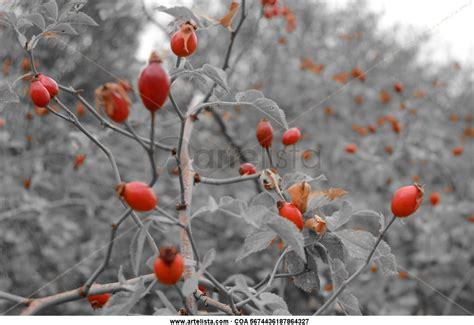 fotos de naturaleza en blanco y negro blog de fotograf 237 a naturaleza t 243 xica antonio granados alvaro artelista com