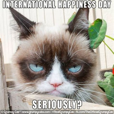 Make A Grumpy Cat Meme - pinterest the world s catalog of ideas