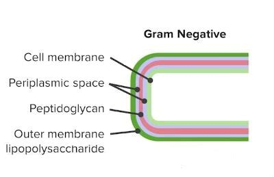 lipopolysaccharide (lps) of gram negative bacteria
